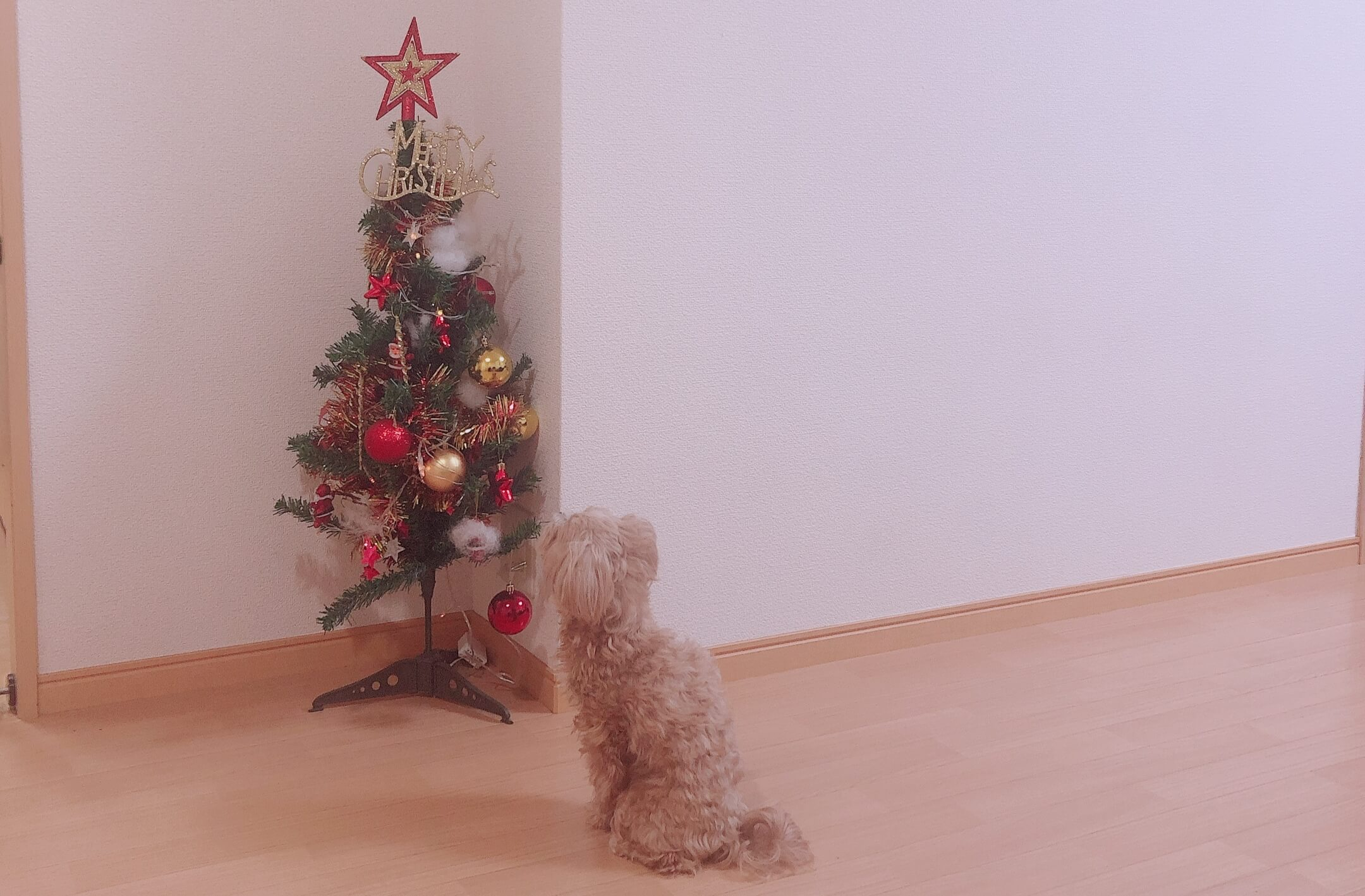 犬とクリスマスツリー