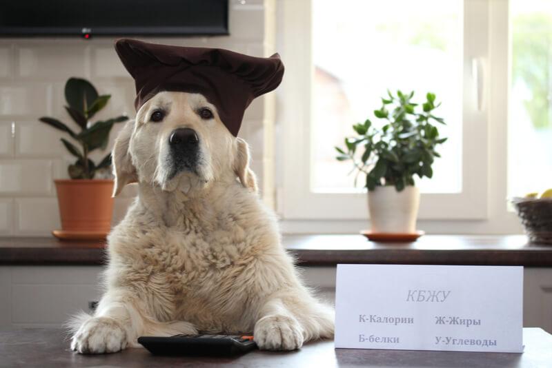 カロリーを気にする犬