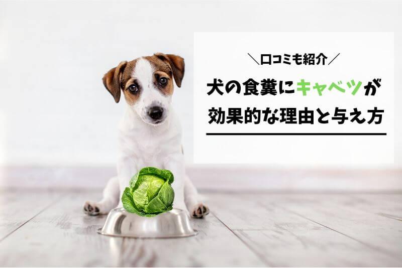 犬の食糞にキャベツが効果的な理由と与え方