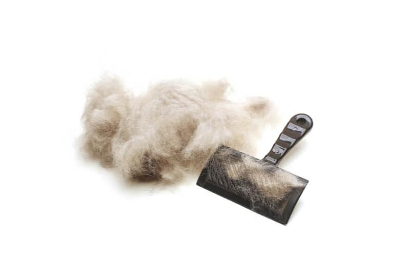 犬の抜け毛とブラシ