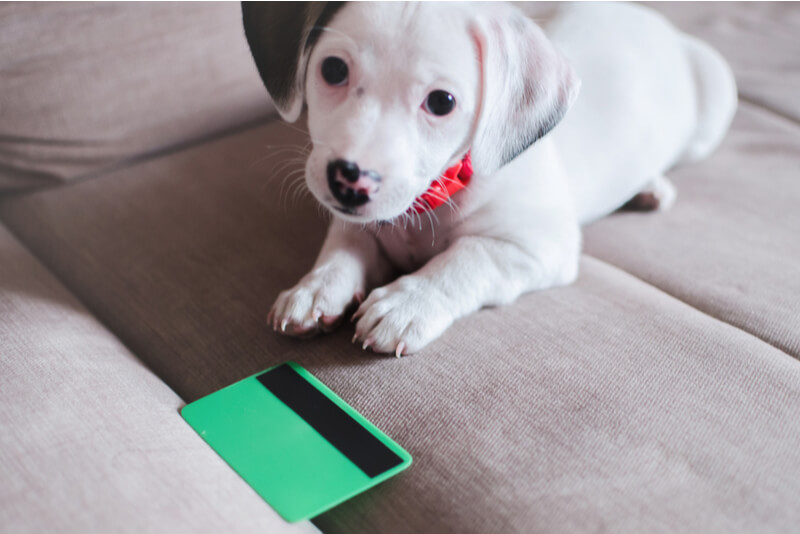 犬と預金通帳