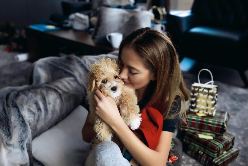 家の中で飼い主さんに抱かれるマルプー