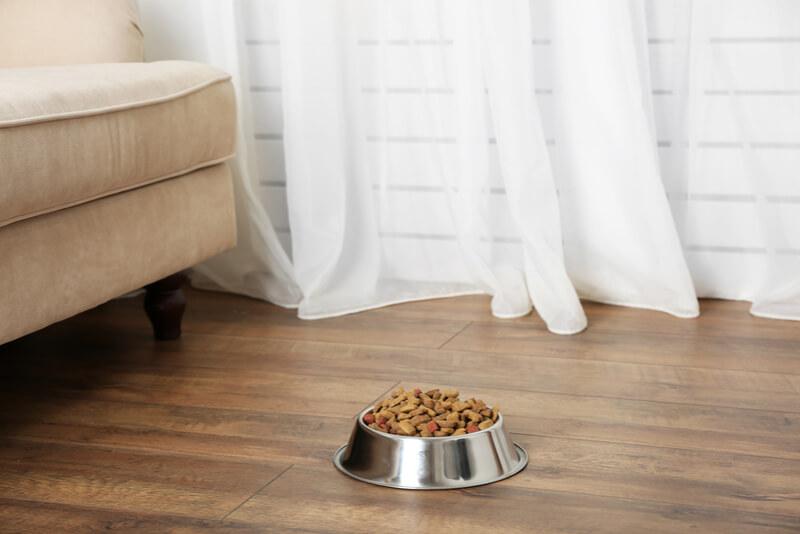 床に置かれたドッグフードのお皿