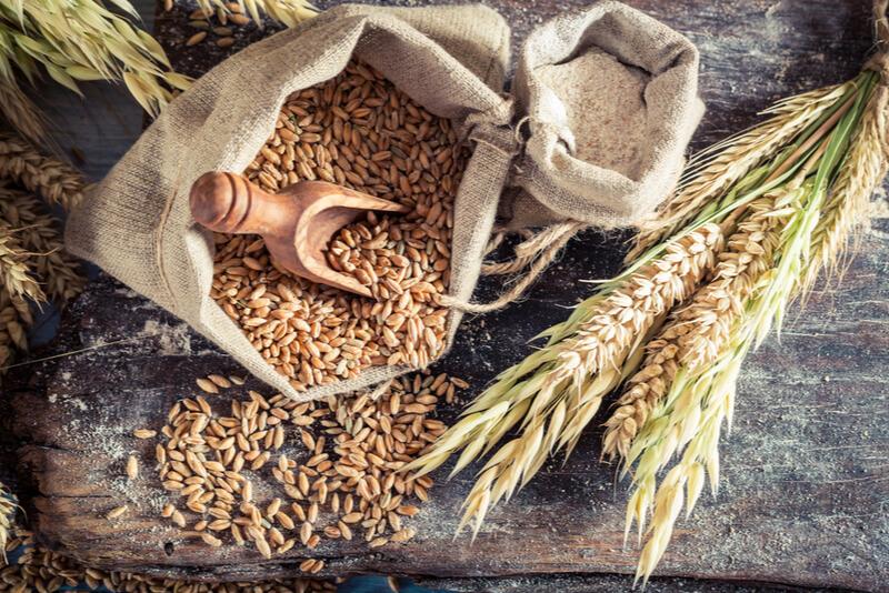 犬にとって消化の悪い穀物の画像