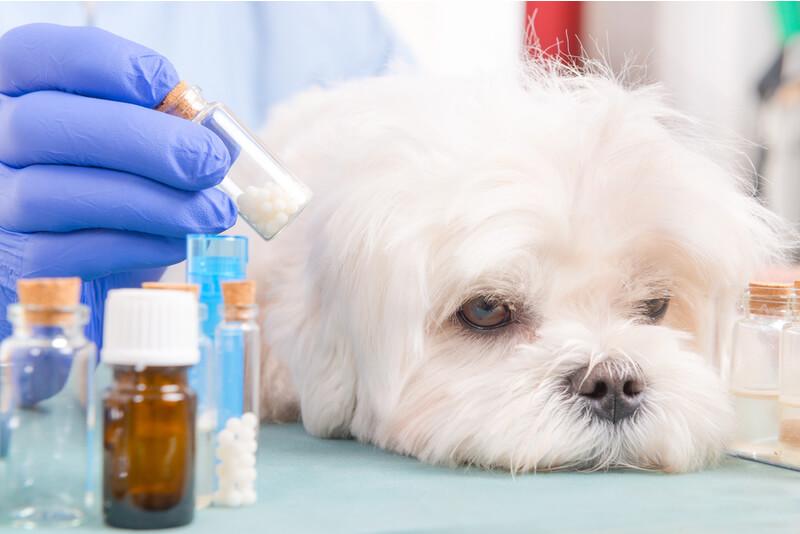 添加物と犬の画像