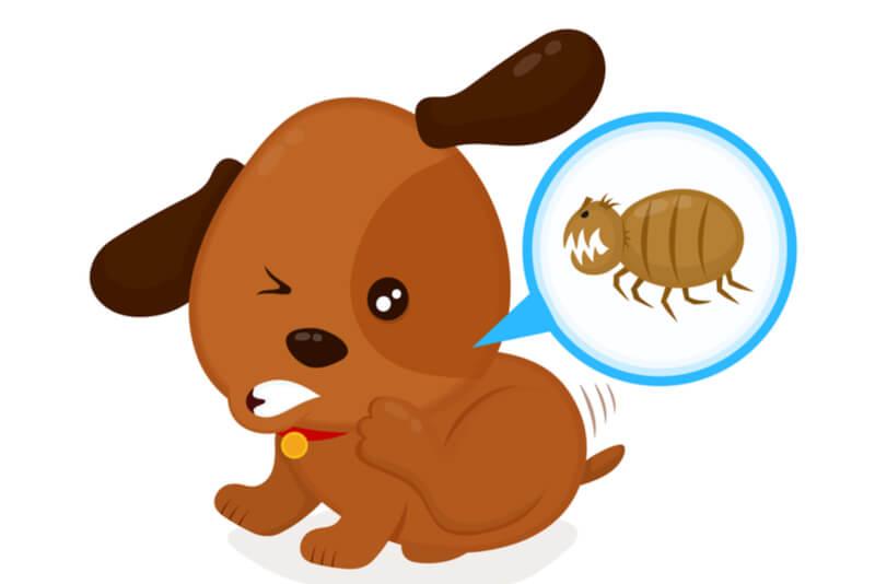 犬のノミアレルギー