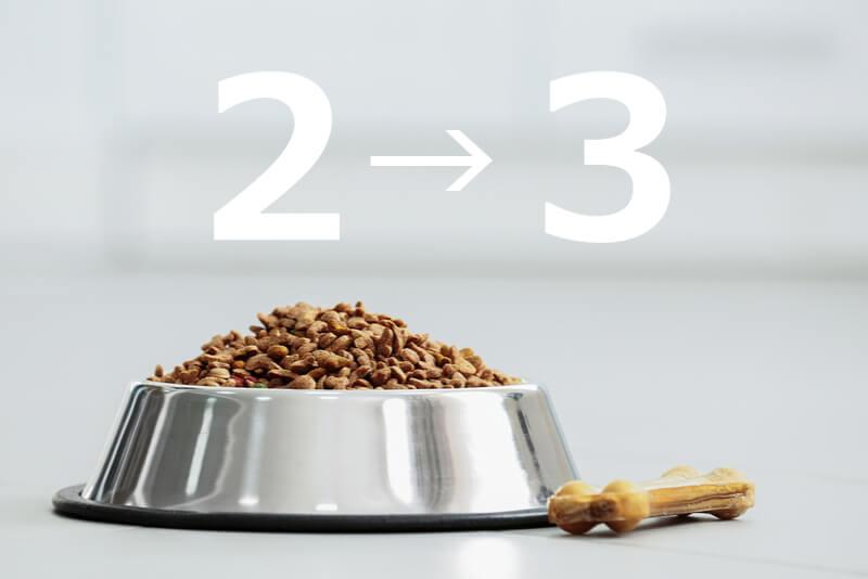 食事の回数を増やすことで犬は太りやすい