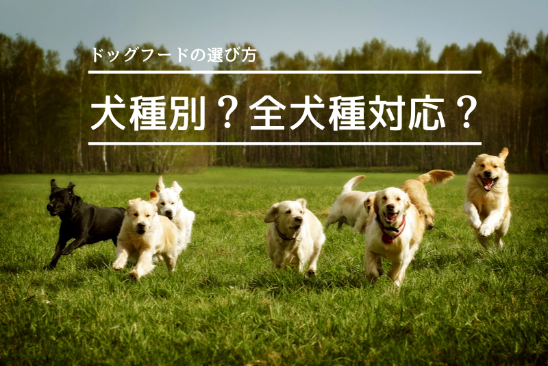 ドッグフードの犬種別と全犬種対応どっちにする?【新事実も発覚】