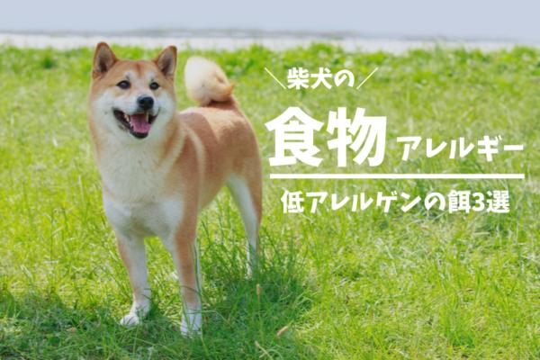 【保存版】柴犬がアレルギーになりやすい食べ物とおすすめの餌3選
