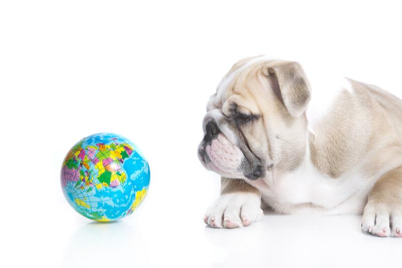 地球儀をながめる犬