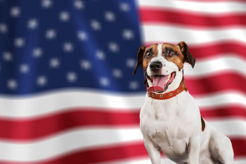アメリカ国旗と犬