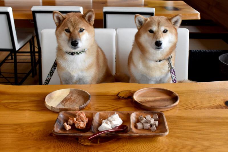 ごはんを欲しがる2匹の柴犬