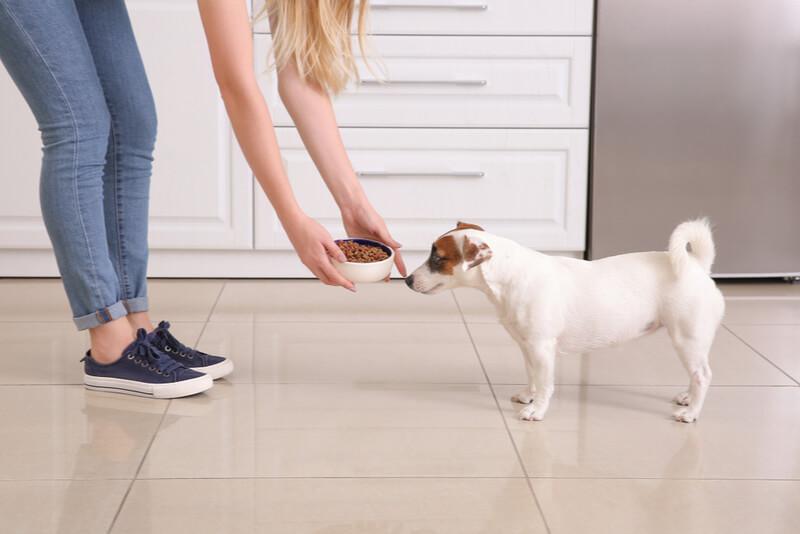 ドッグフードを与える女性と食べる犬
