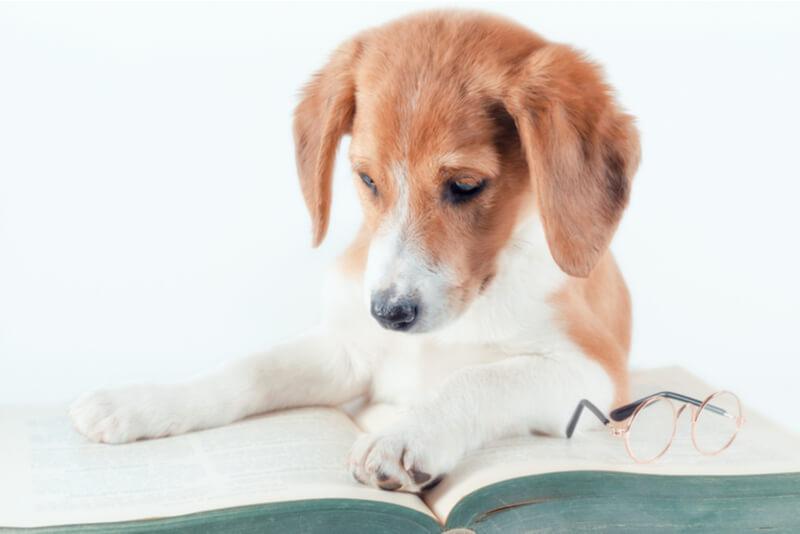 安全なドッグフードを見抜くために本を読む犬