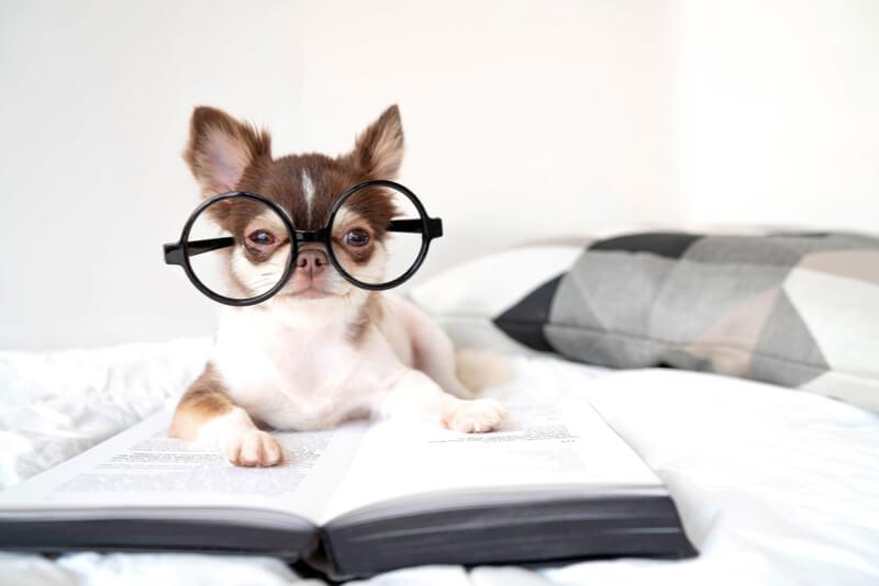 ドッグフードを真剣に選ぶメガネをかけた犬