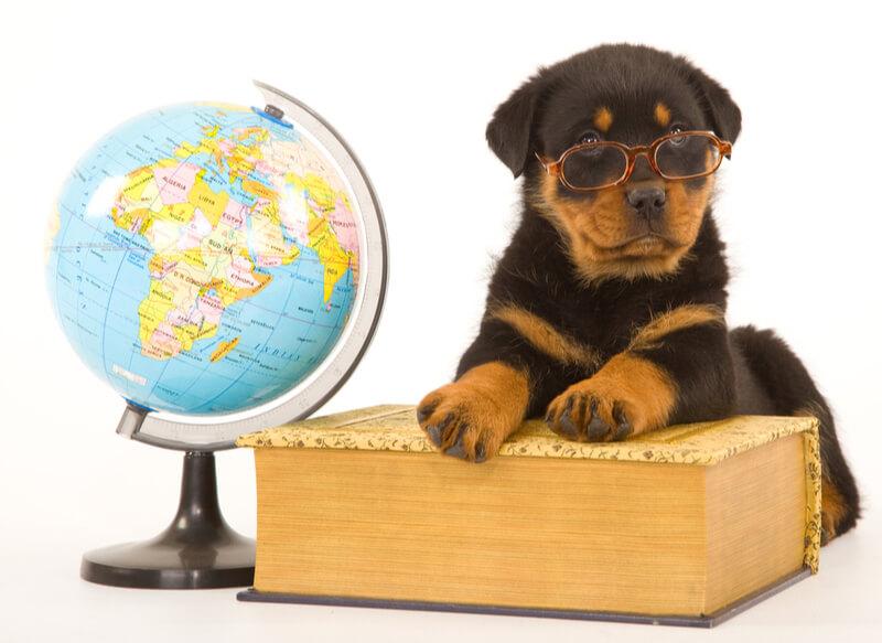 地球儀と本と犬