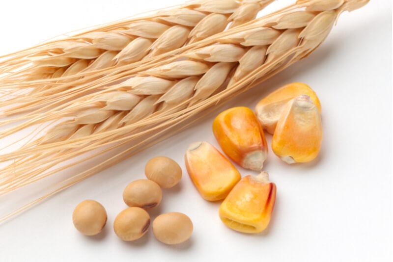 柴犬の食物アレルギーになりやすい小麦と大豆とトウモロコシ