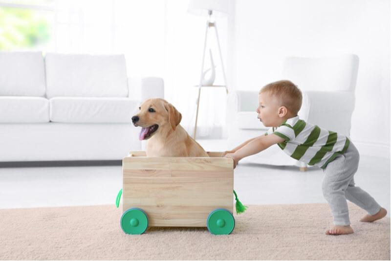 小さな子どもと遊ぶ犬