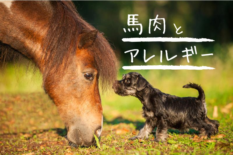 犬のアレルギーには馬肉がおすすめ!馬肉以外の選択肢やローテーションも