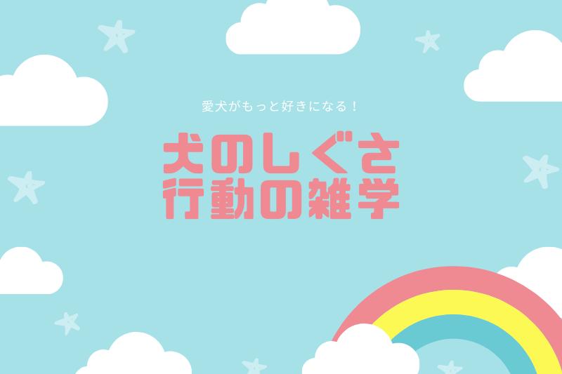 犬のしぐさ・行動にまつわる雑学【11選】