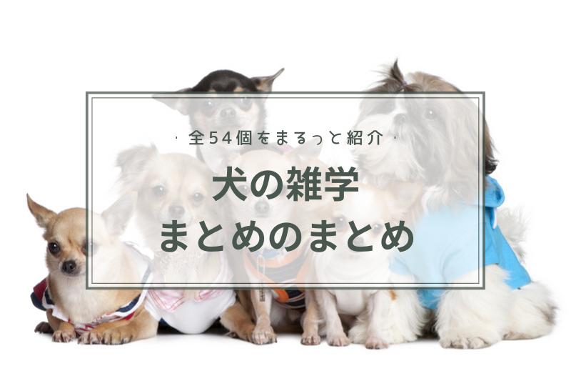 【全54個】犬の雑学まとめのまとめ 誰かに話したくなる「うんちく」をまるっとご紹介!
