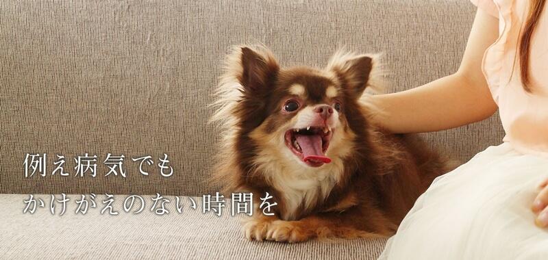 犬心~糖&脂コントロール~の口コミ評判