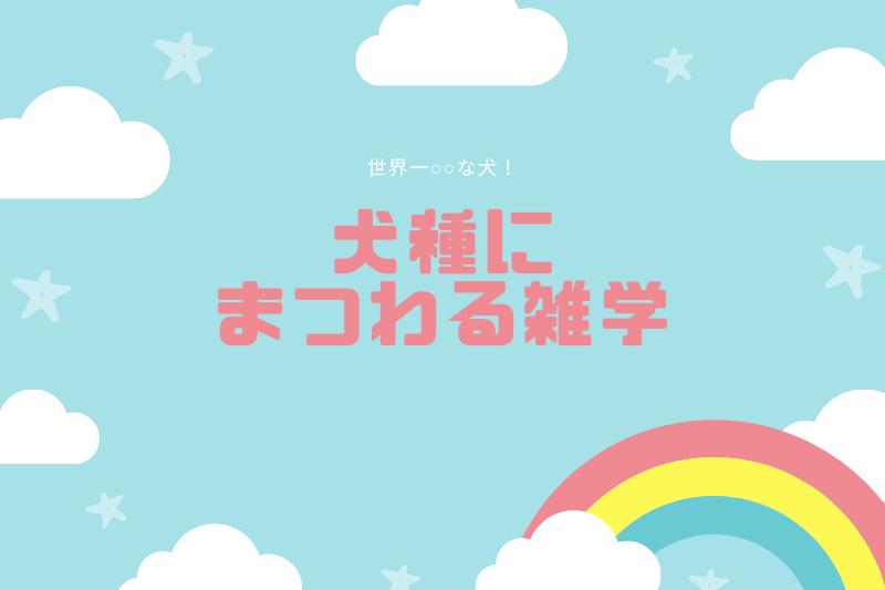 犬種にまつわる雑学【11選】
