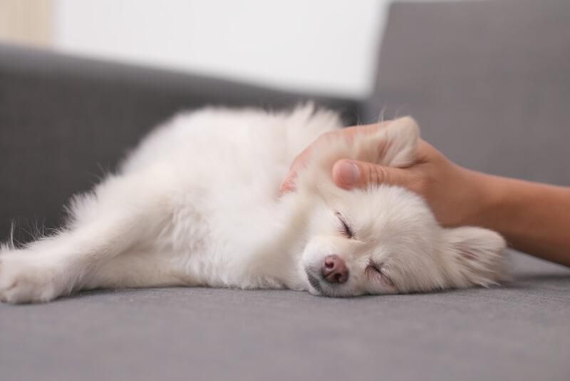 撫でられて気持ちよさそうにする犬