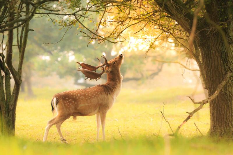 馬肉と同じく犬のアレルギーになりにくい鹿