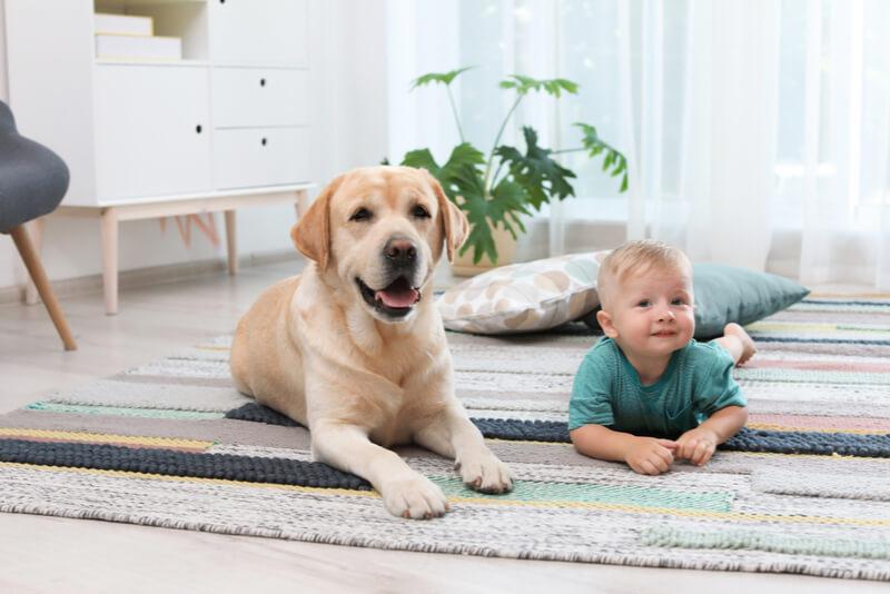 大型犬と子供が仲良くしている