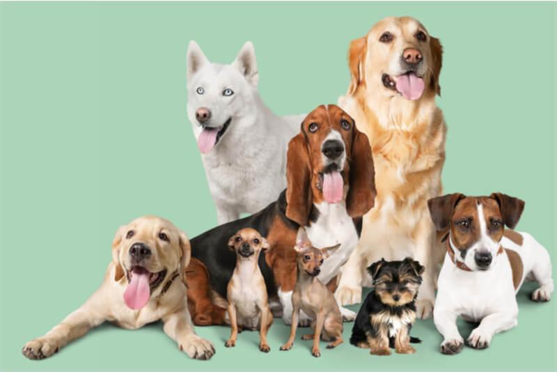いろいろな犬種や大型犬と小型犬の集合