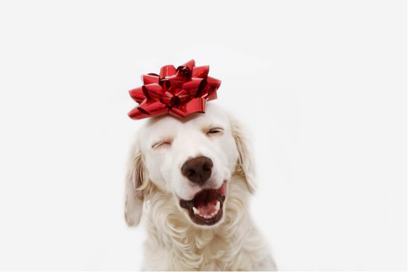 リボンをつけた笑顔の犬