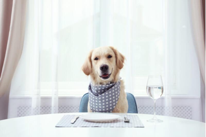 ご飯を食卓で待つ犬
