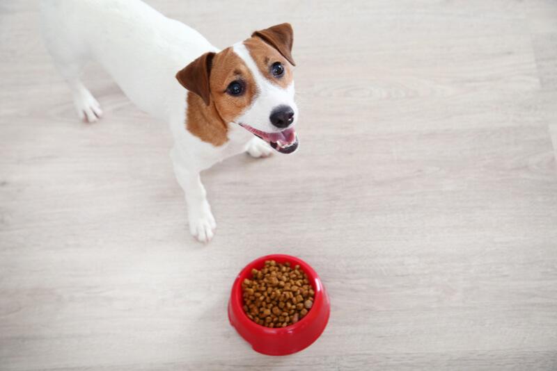 ご飯食べてもいいの?と飼い主さんに聞く犬
