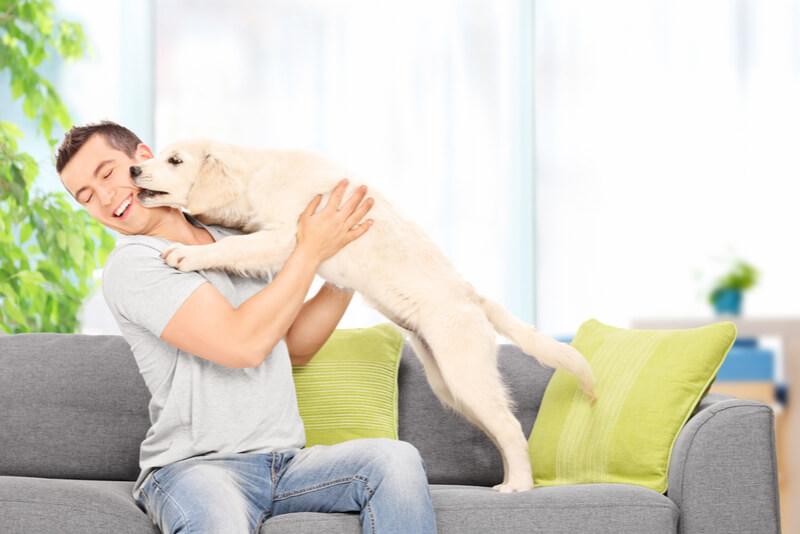 飼い主の顔をなめる犬
