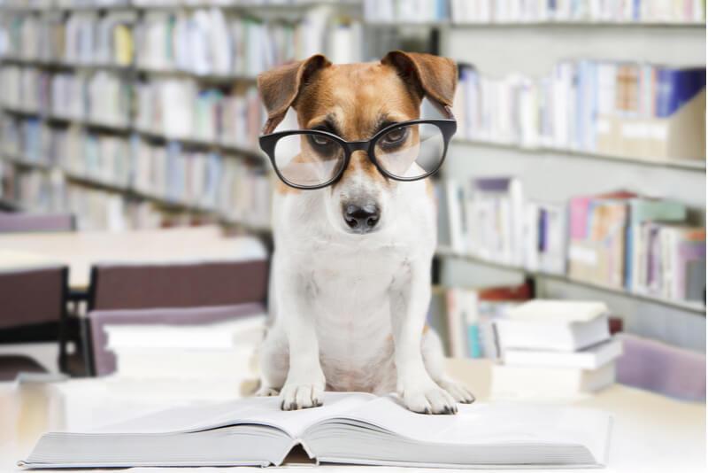 ドッグフードの選び方を調べる犬