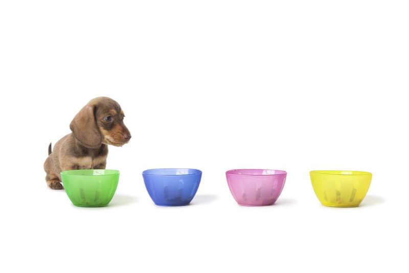 どのドッグフードを選ぶべきか迷っている犬