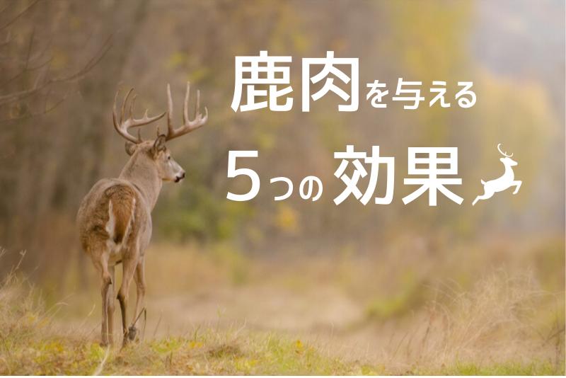 犬に鹿肉を与える5つの効果がスゴイ!上手な与え方や購入場所もご紹介