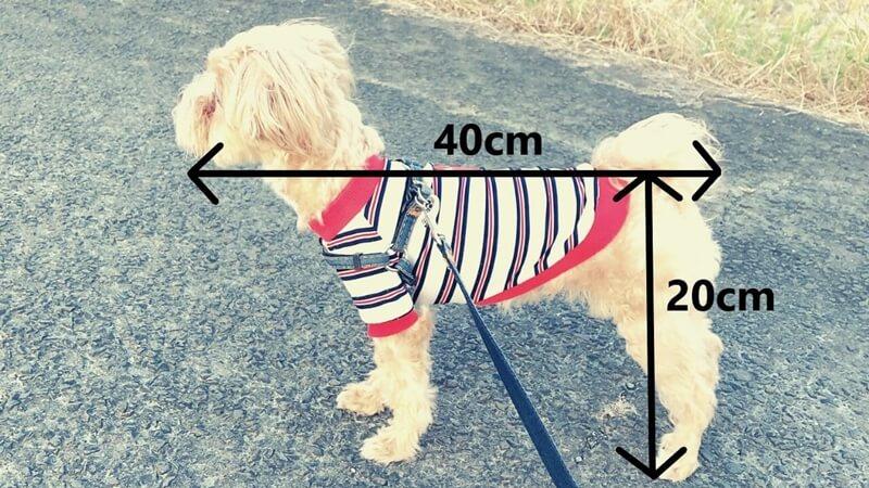 マルプーの成犬時の大きさ