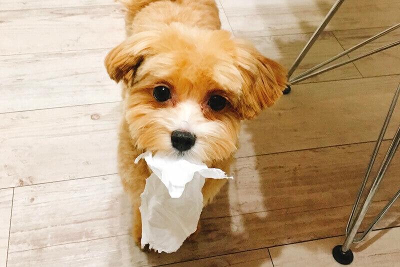 【重要】犬の可愛さは見た目じゃないよ