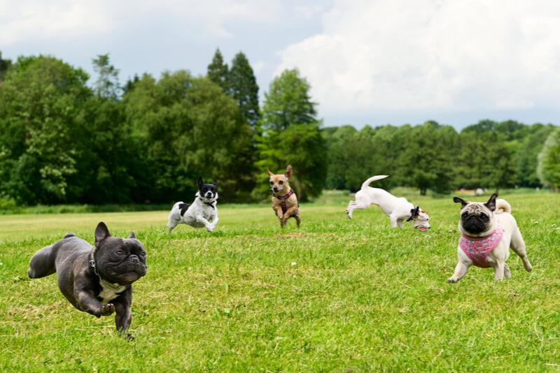 ドッグランを走り回る犬