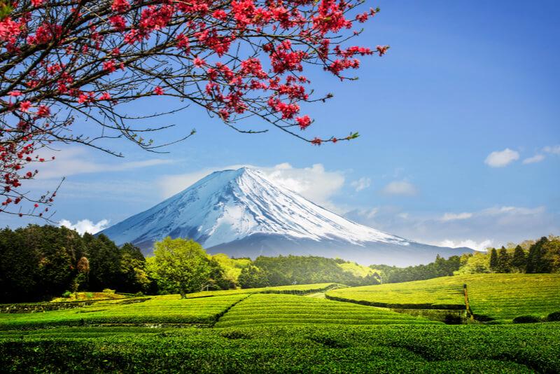富士山と畑
