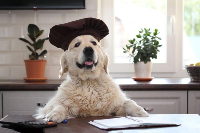 キッチンに立つ犬