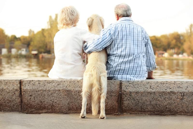 老夫婦とシニア犬