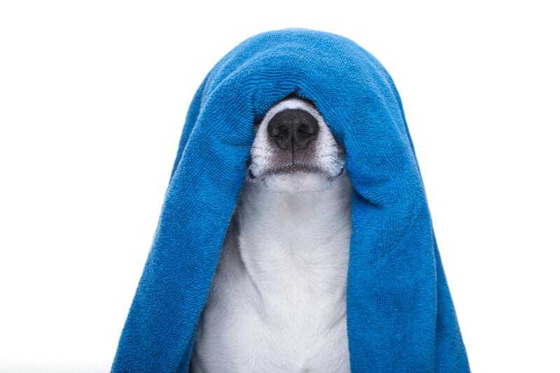バスタオルをかぶった犬