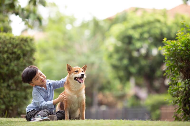 柴犬の食が細い原因とガラッと食いつきが良くなる解決策【まとめ】